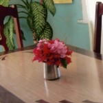 FRESH FLOWERS FROM SHAKESPEARE COTTAGE GARDEN